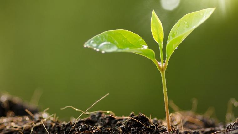 Estudantes do Senai-MT plantam árvores para reduzir impacto de CO2