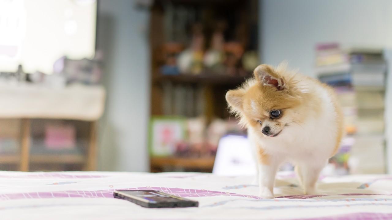 Conheça tecnologias que seu cão e gato vão amar
