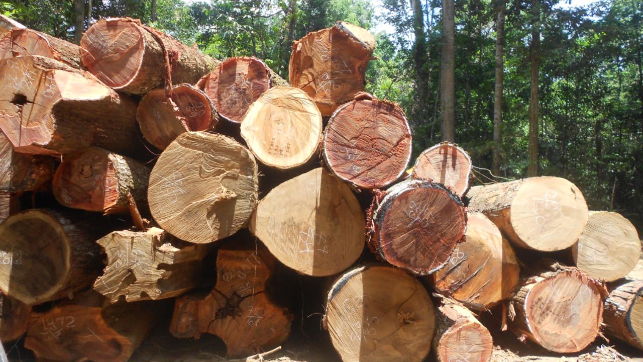 Insegurança jurídica é o maior desafio para aumentar  investimentos em negócios com florestas nativas