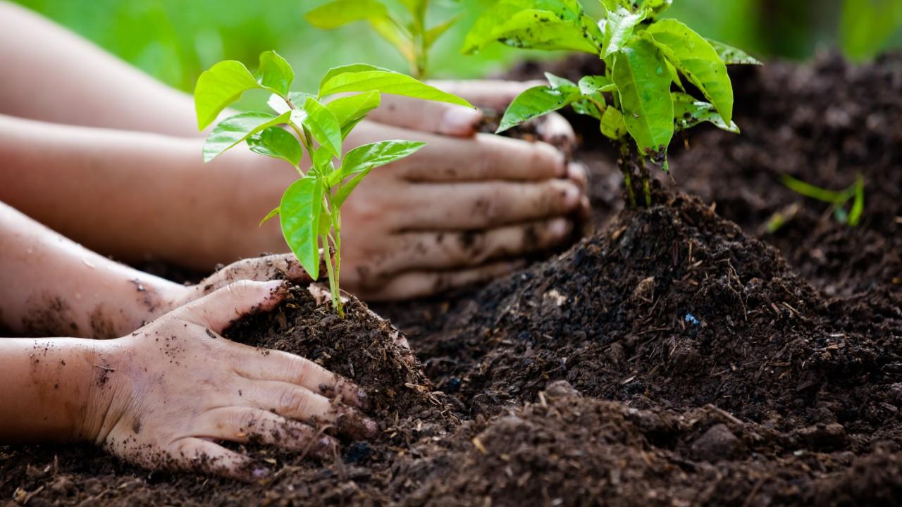 Regularização fundiária é passo importante para o desenvolvimento sustentável