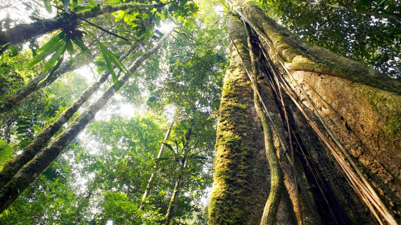 95,4% dos empresários consideram licenciamento importante para conservação do meio ambiente