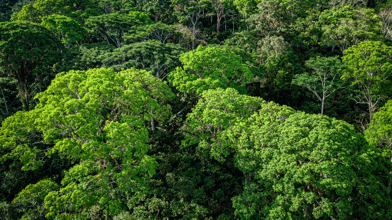 Brasil integra oficialmente o Protocolo de Nagoia