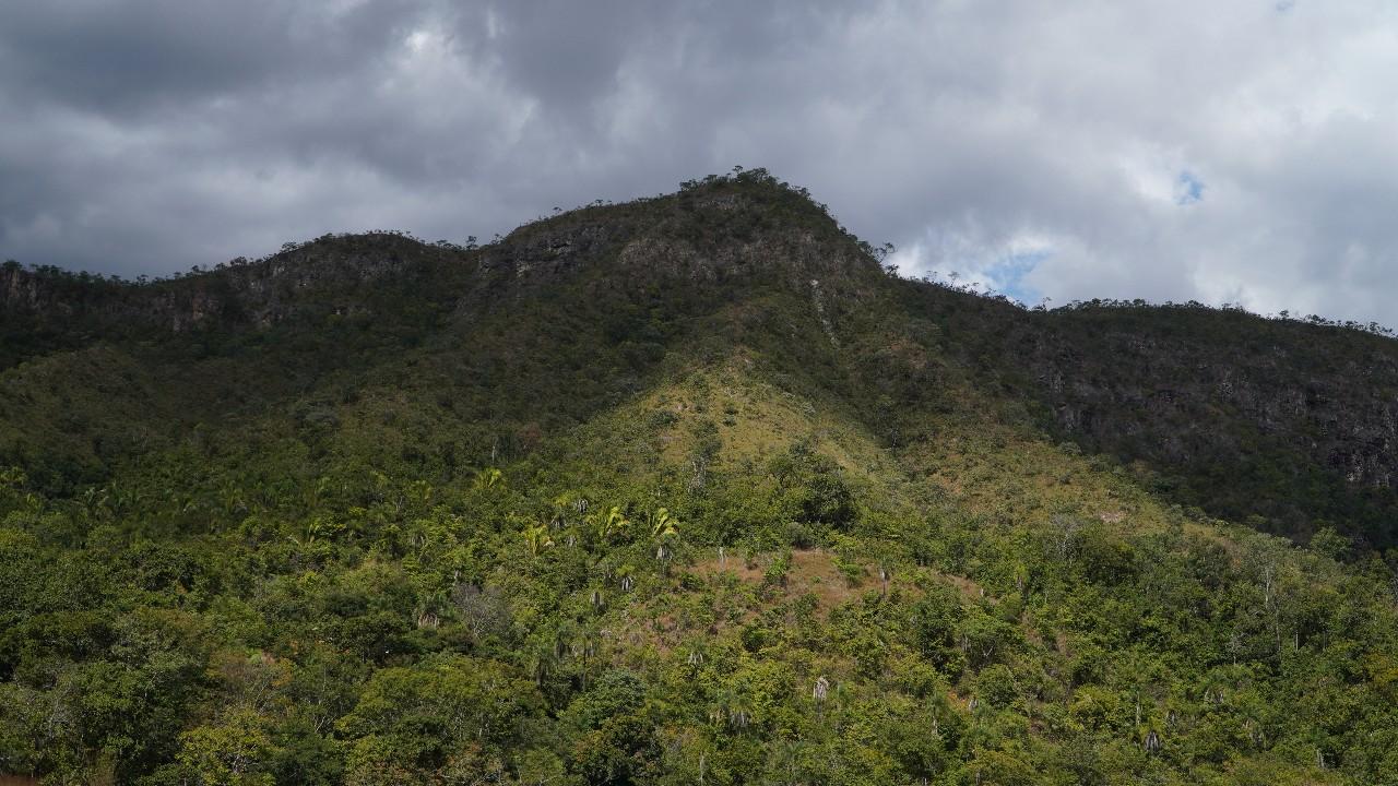 Indústria brasileira defende propostas para a conservação florestal