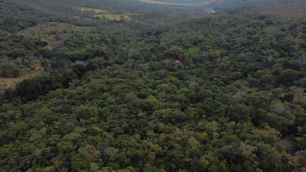 Concessão florestal é um dos caminhos para combater a extinção de árvores nativas