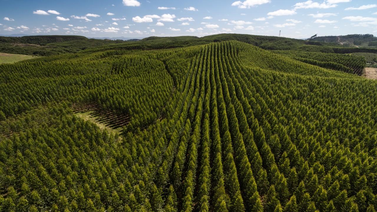 Indústria vê agenda de mudanças climáticas como  oportunidade de desenvolvimento do país