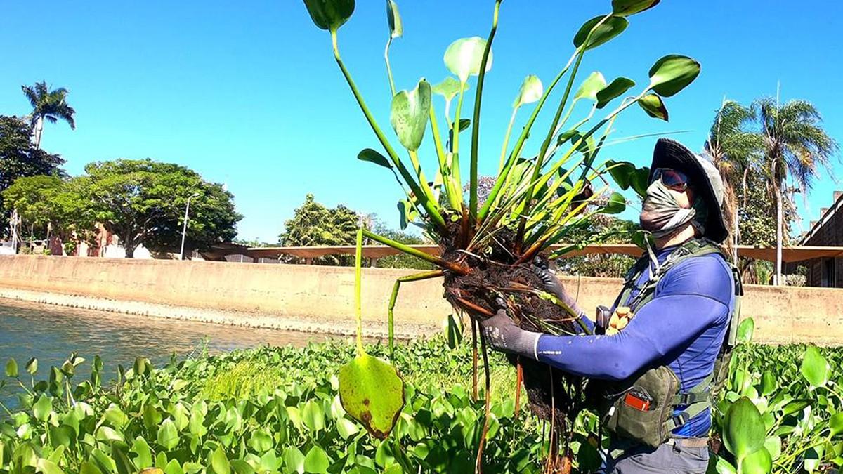 ISI Biomassa vai recolher plantas aquáticas de balneário para produção de bio-óleo