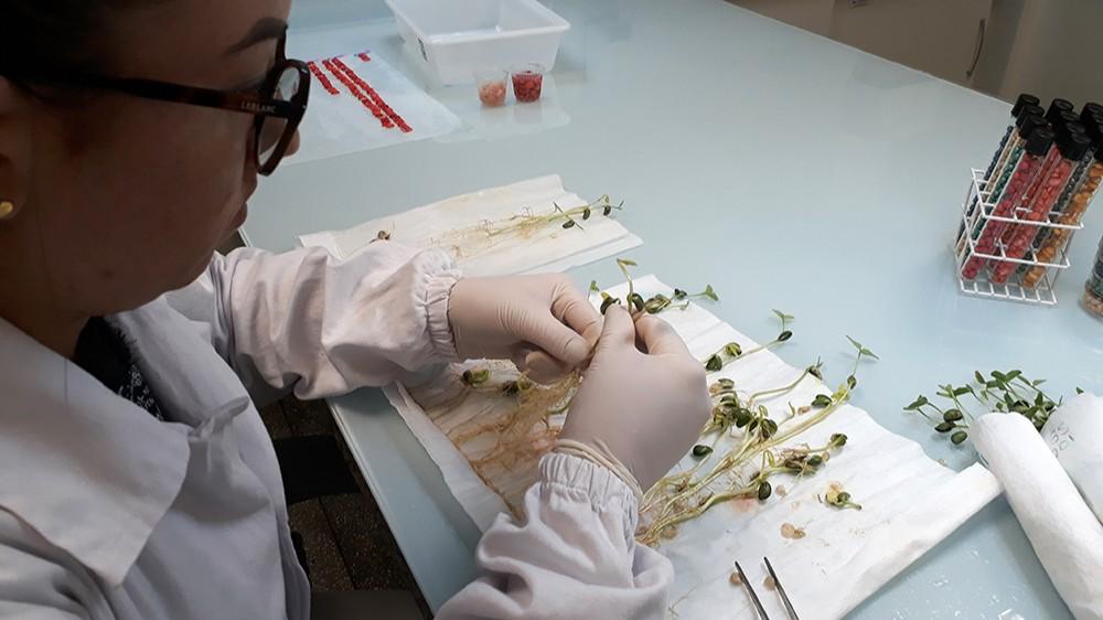Instituto SENAI de Tecnologia em Alimentos e Bebidas terá laboratório para analisar sementes