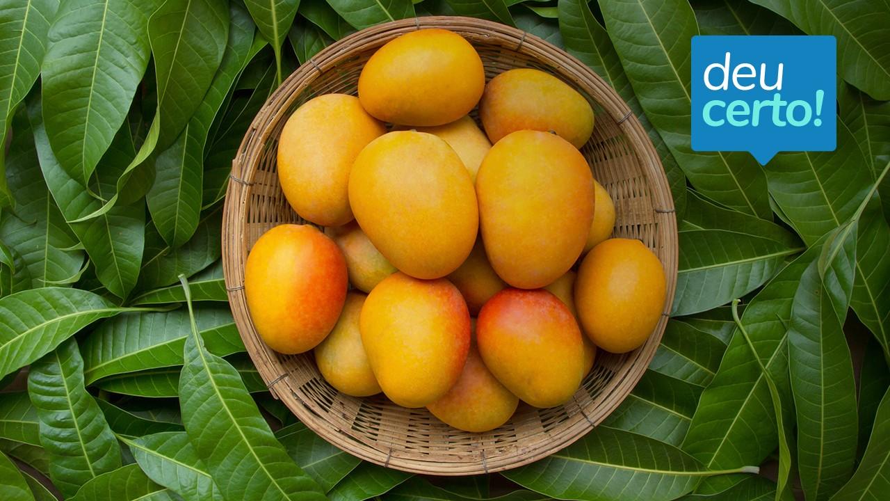 Deu pano para manga: SENAI e Embrapa criam embalagem verde para exportação da fruta