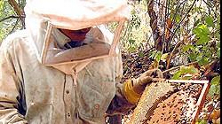 Pantanal conquista selo de Indicação Geográfica pela produção de mel