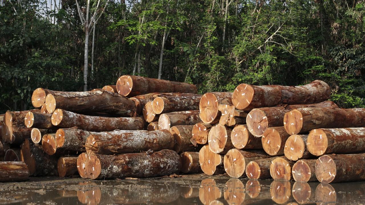 Indústria defende a inclusão de mais de 60 milhões de hectares de terras devolutas em concessões florestais