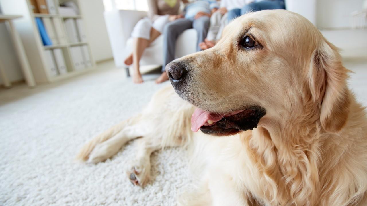 VÍDEO: Indústria de produtos para os pets continua ativa