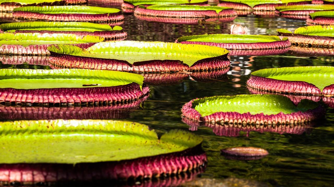 O que é o Marco Global para a Biodiversidade Pós-2020?