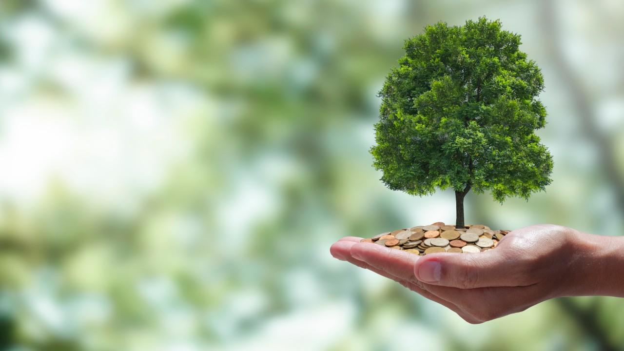 Mecanismo de Desenvolvimento Sustentável pode gerar 70 mil empregos em dez anos