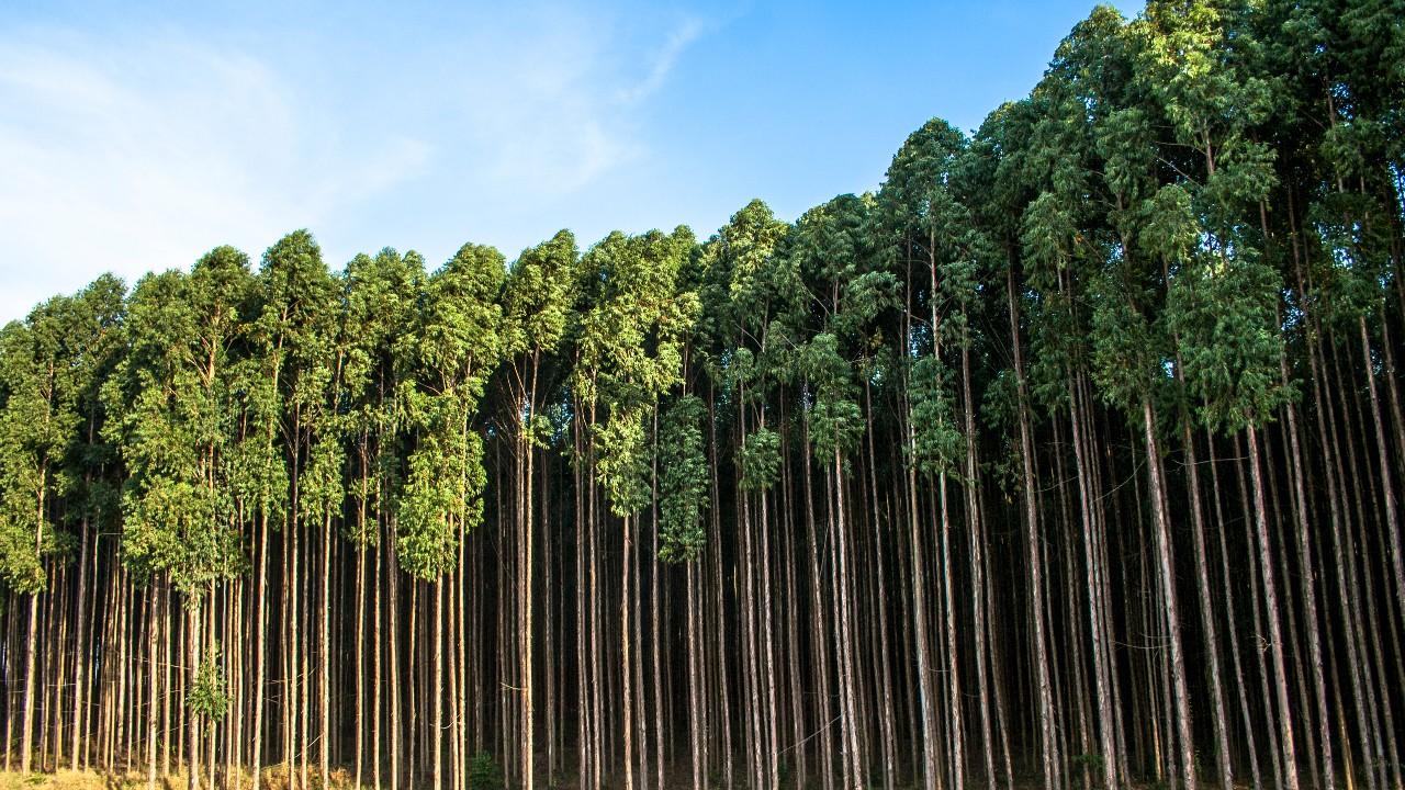 Indústria brasileira faz a sua parte na redução de emissões