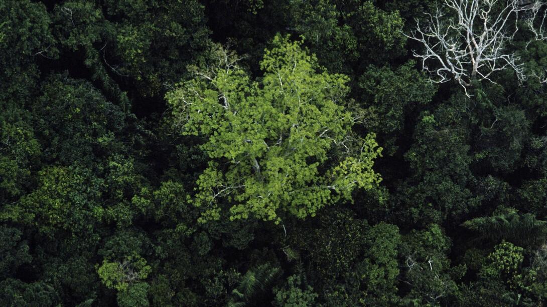 Como a Convenção sobre Diversidade Biológica influencia a agenda de bioeconomia?