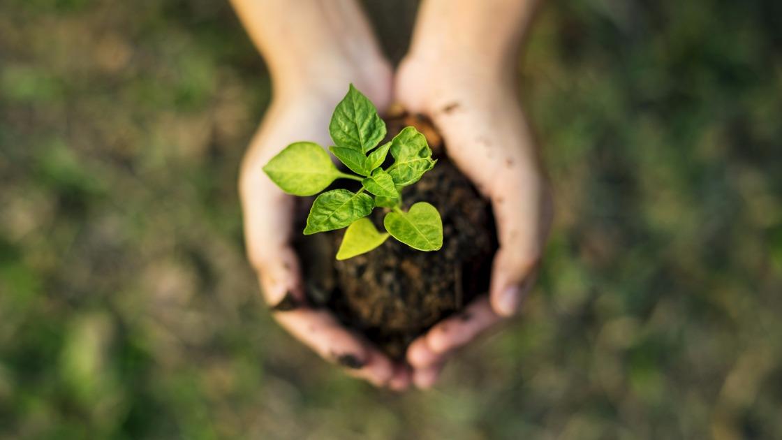 Fórum de Biodiversidade debate oportunidades do uso sustentável de recursos naturais