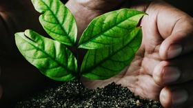 CNI apresenta a governadores dos estados da Amazônia estudo sobre oportunidades do mercado florestal