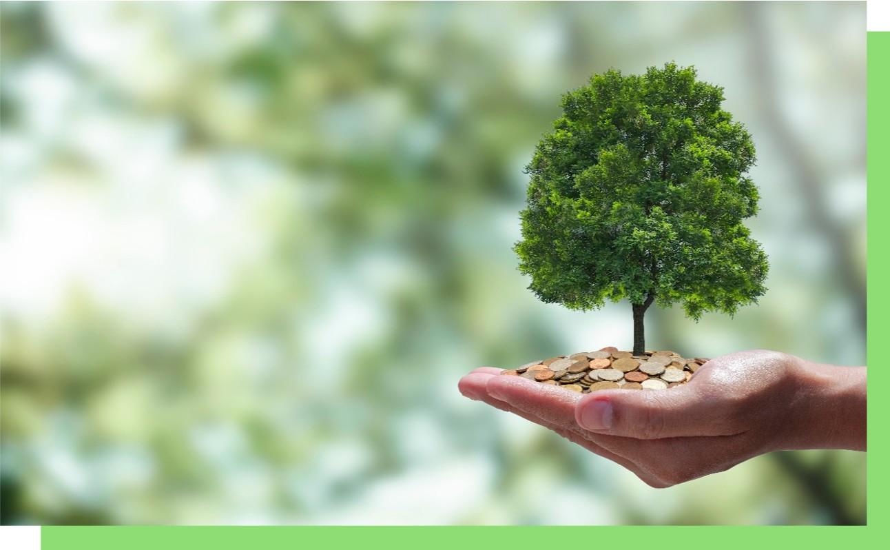 Árvore e moedas nas mãos. Conceitos de dinheiro e meio ambiente como forma de preservar o mundo investindo em negócios