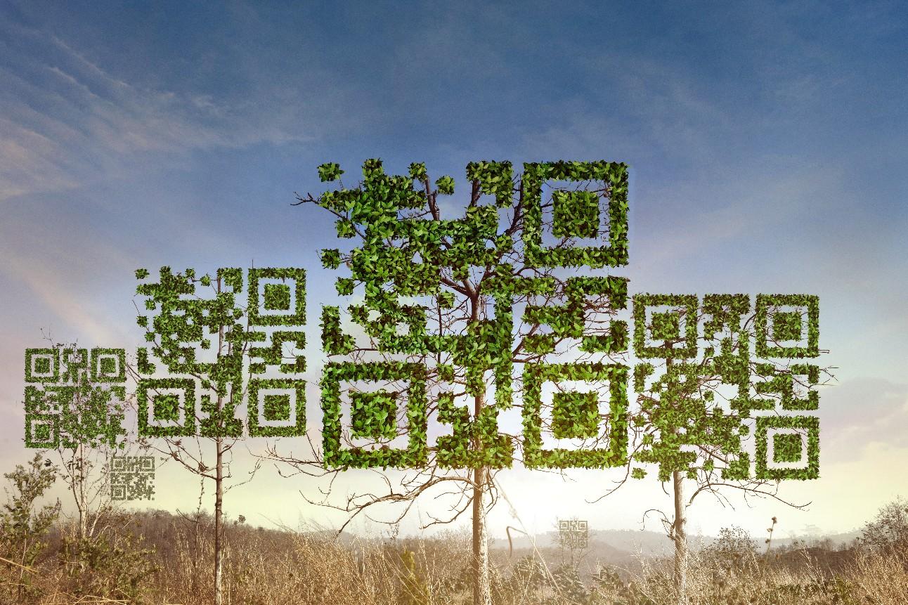 Árvore em forma de qrcode no fundo da floresta seca. Conceito de tecnologia, negócios e natureza