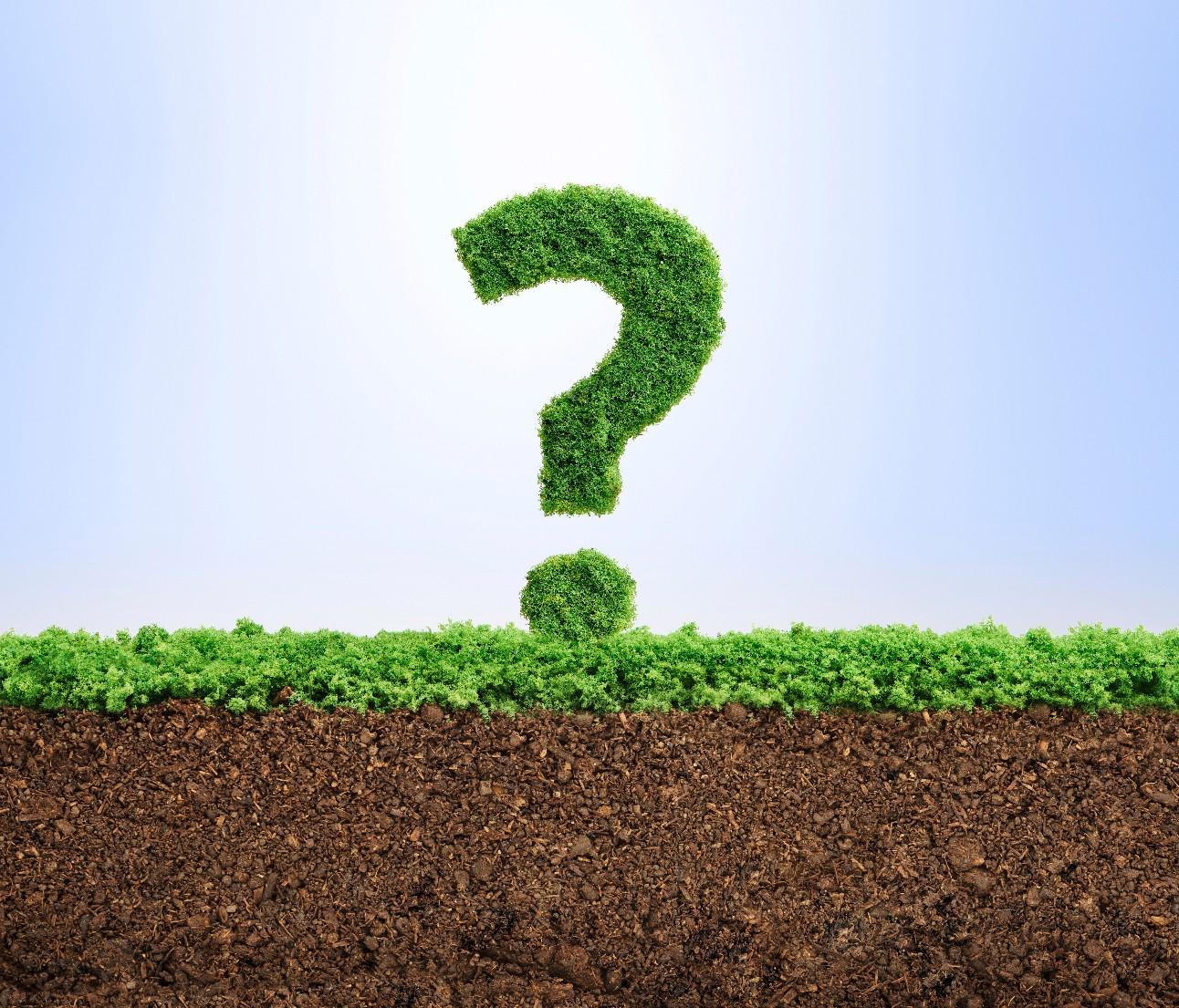 Grama crescendo na forma de um símbolo de ponto de interrogação. Conceito de preocupações ambientais