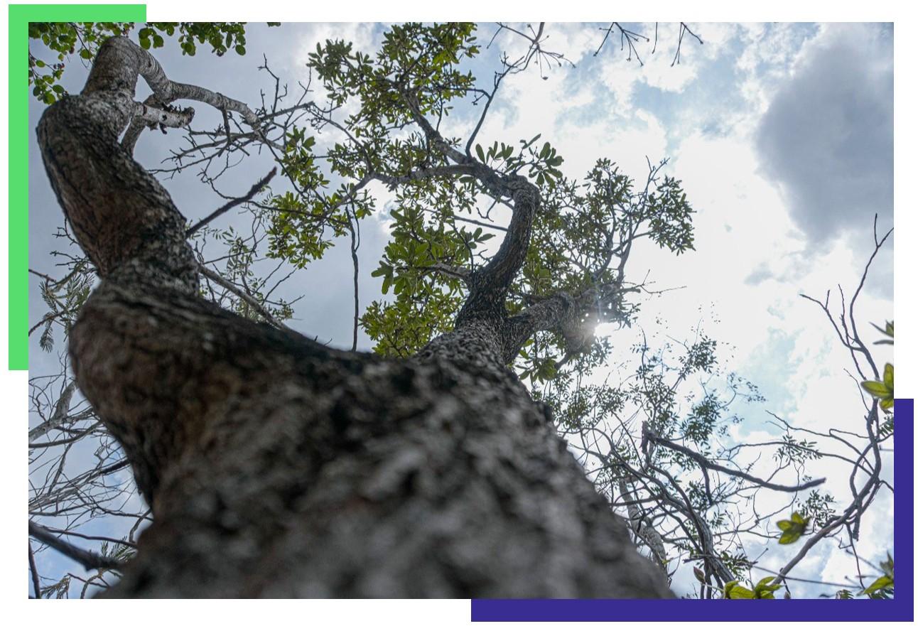 Árvore plantada com céu ao fundo