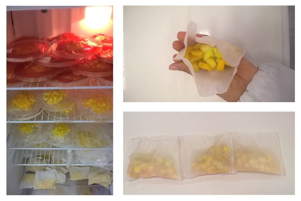 De acordo com a Embrapa, a solução tecnológica deve ser estendida a outras frutas