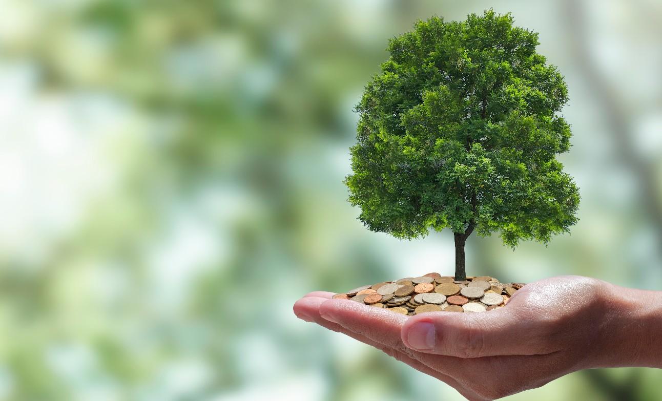 Árvore e moedas nas mão