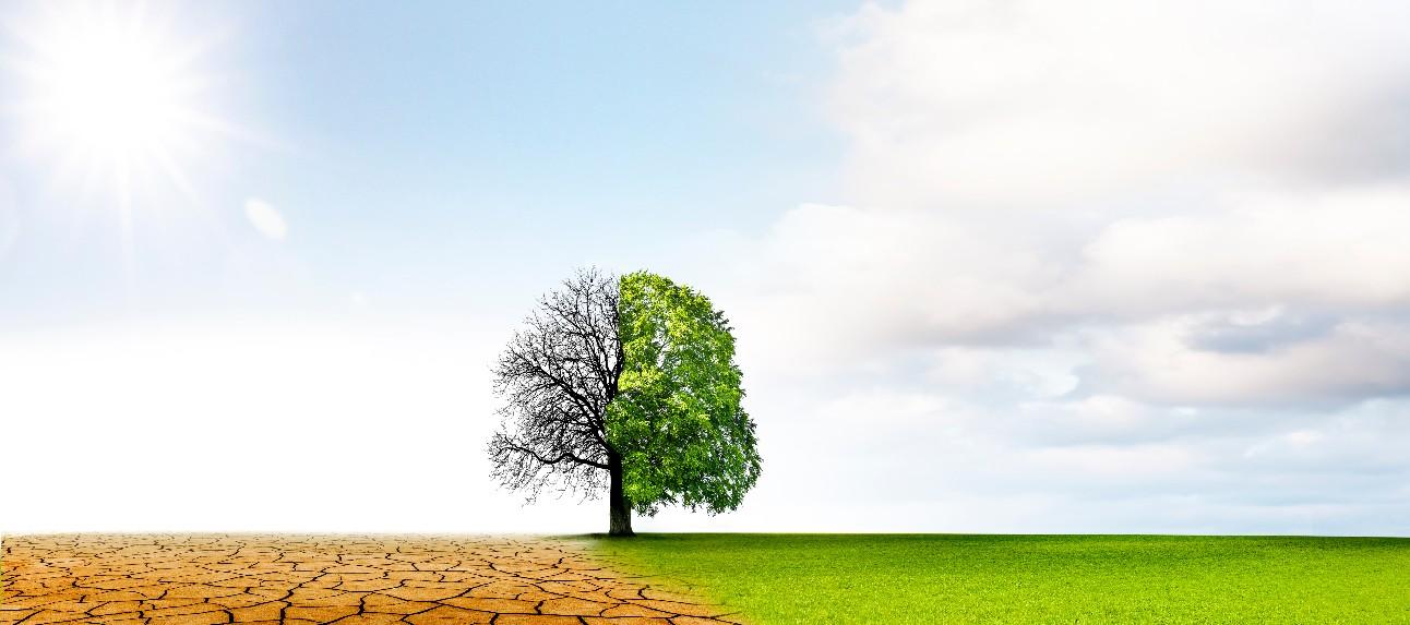 Mudanças climáticas da seca ao crescimento verde
