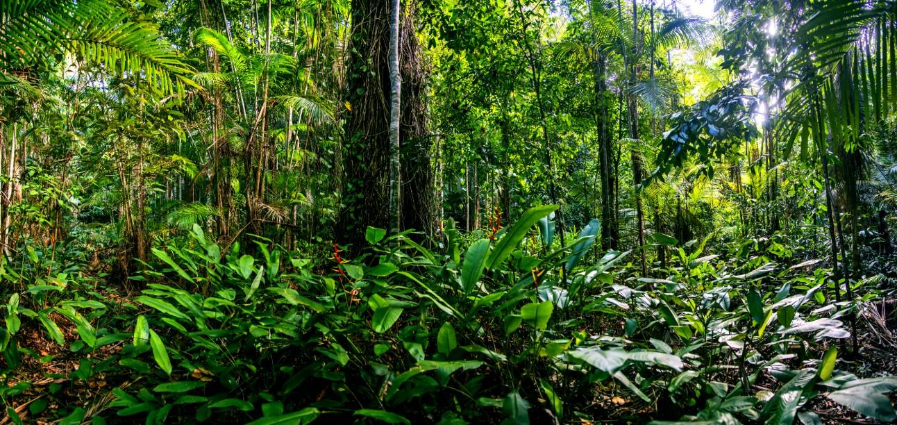 Fotografia capta floresta densa no Espírito Santo